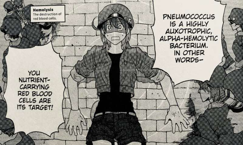 Red Blood Cell AE-3803 learns that she is the invading bacteria's target in CELLS AT WORK Vol. 1 Chapter 1.